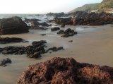 Каменистый берег во время отлива